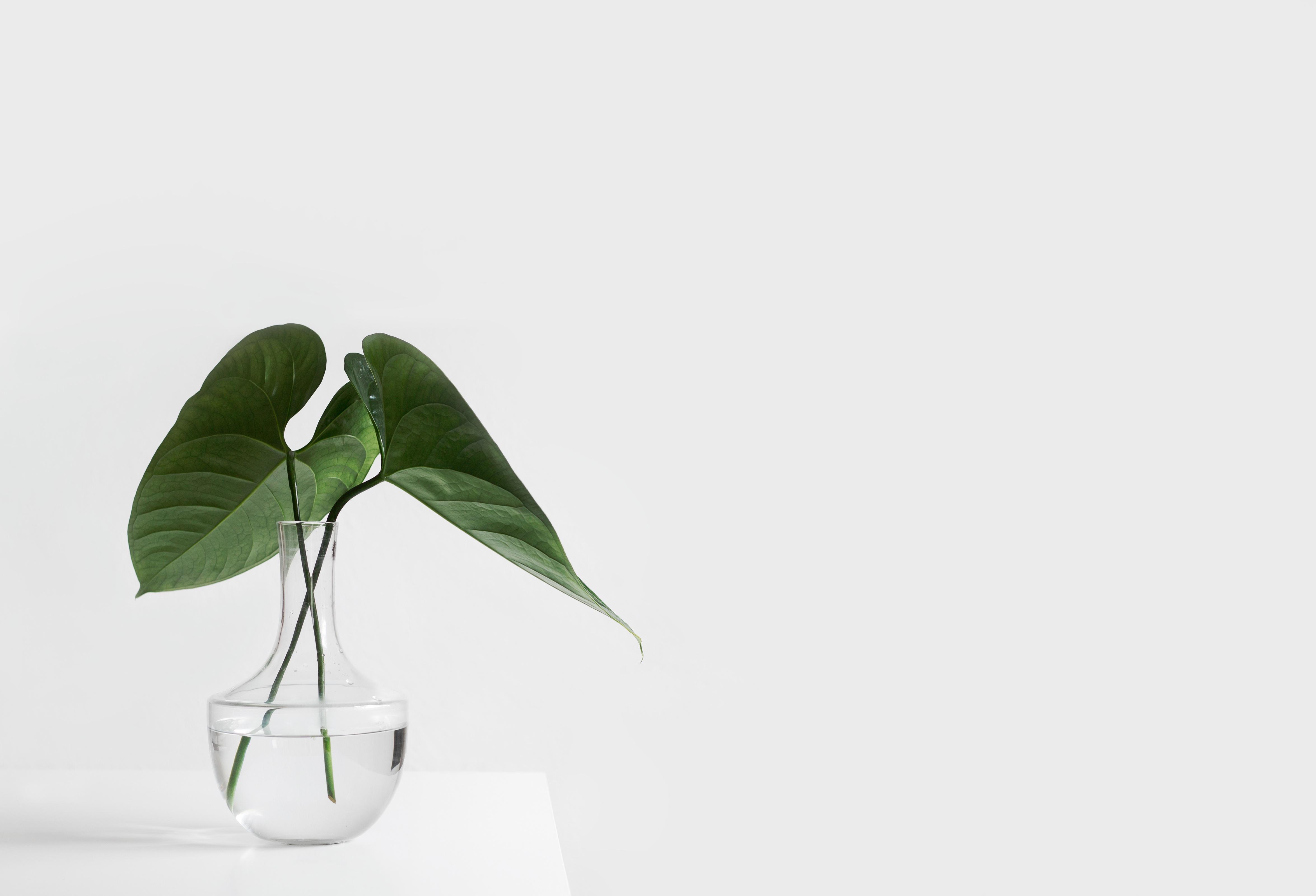 minimalist vase 1